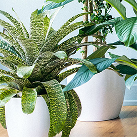 caring for house plants gro well brands inc